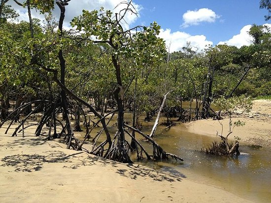 Daintree National Park : Cow Bay mangroves