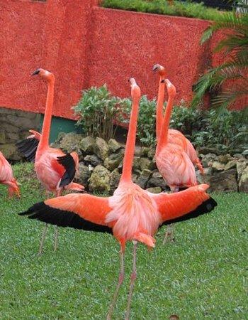 Iberostar Quetzal Playacar : flamingoes exercising