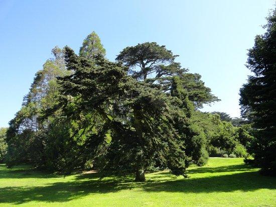 San Francisco Botanical Garden: gramados e árvores lindos