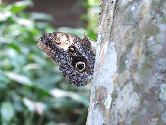 Black Rock Lodge: Butterfly near rooms