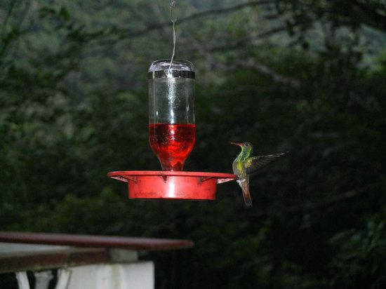 Black Rock Lodge: Hummingbird at restaurant
