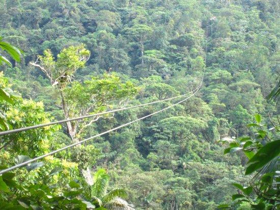 Rainforest Adventures : The Adrena-Line.  Ya, it's 700-meters!