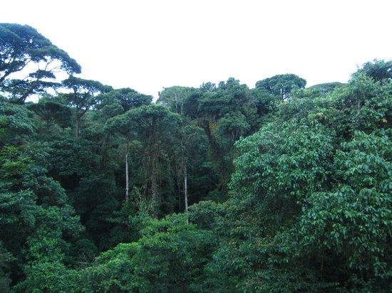 Rainforest Adventures : Rainforest
