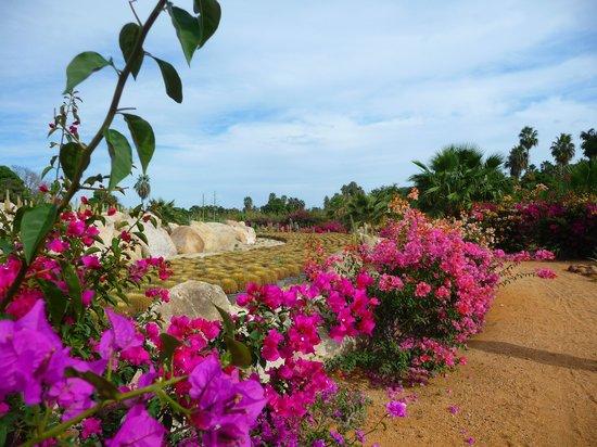 Wirikuta Garden: walkway.