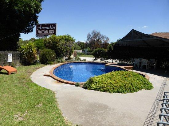 Arcadia Motor Inn : pool