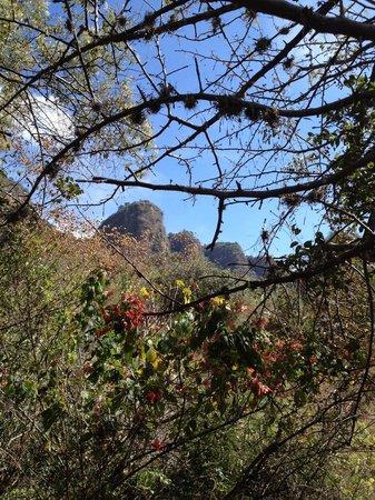 Copalli Malinalco: La vista desde la hamaca