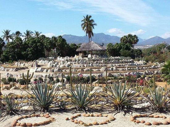 Wirikuta Garden: One of the cactus circles.