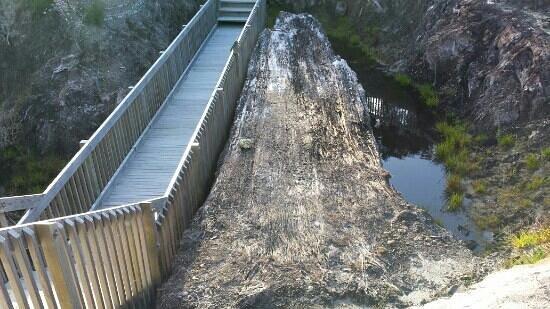 Gumdiggers Park: 100,000 year old kauri log