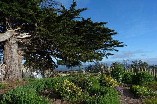 Seaview Farm: Garden