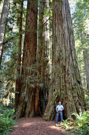 Redwood National Park: Redwood Forest