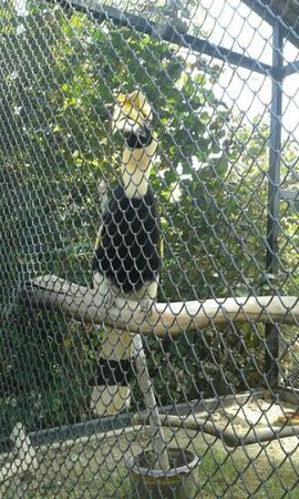 Chainat bird park: นกเหงือก