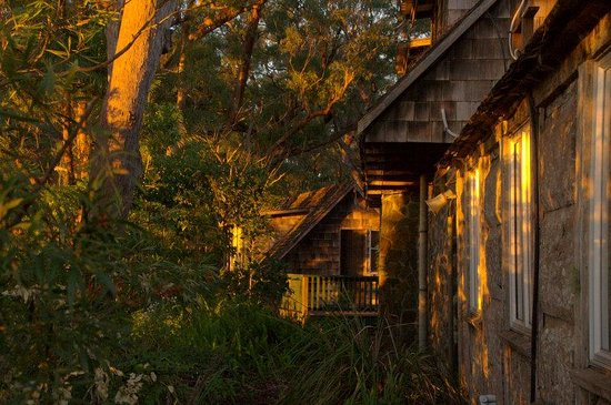 Binna Burra Mountain Lodge: Showing the hewn timber construction of the Casuarina Cabins-photo taken at dawn.