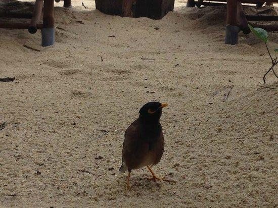 Buri Rasa Koh Phangan : bird