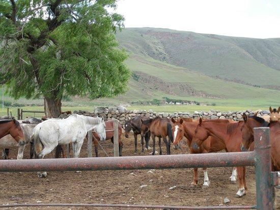 Estancia Las Carreras Jesuitica: Los caballos de la estancia
