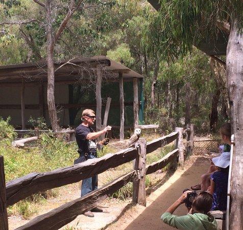 Eagles Heritage Wildlife Centre: Flight / bird show.