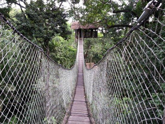 Inkaterra Hacienda Concepcion : Canopy walk