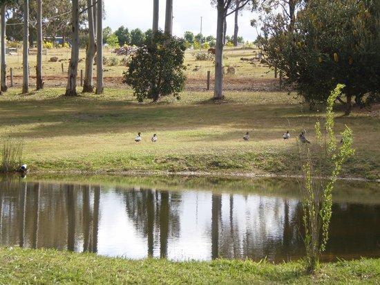 Bridgetown, Australien: Dam
