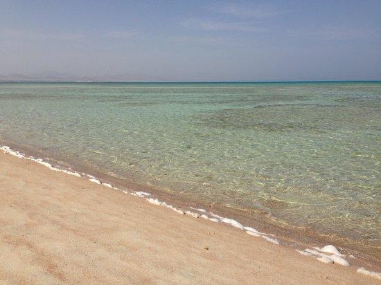 Sharm Dreams Resort : Пляж