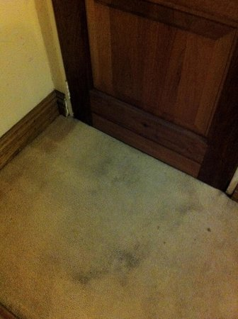 Safari Club : Dirty carpet