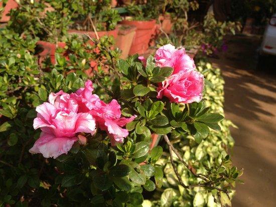 Good Flowers Picture Of Chilipili Estate Stay Hoskeri Village Tripadvisor