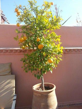 Riad Elias : Orangenbaum
