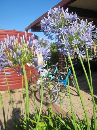 Kellers Bed & Breakfast: the bicycles