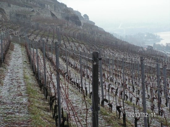 Domaine du Burignon: Vineyard - not so green in winter