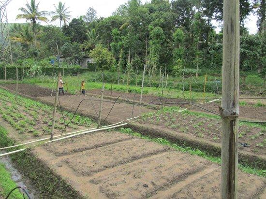 Spice Village : Bio Garten