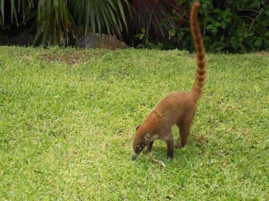 Towel animal - Picture of Grand Bahia Principe Coba ... |Grand Bahia Principe Tulum Animals