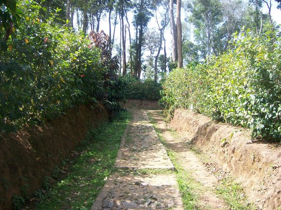 Machaan Nagarhole : Path to Cottage inside the Resort