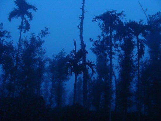 Machaan Nagarhole : Early Morning view outside Resort