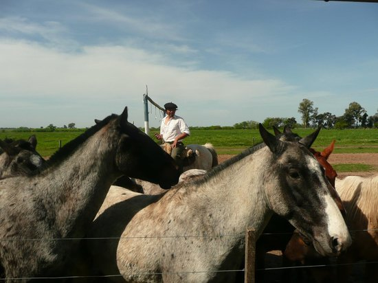 Touristic Argentinian Ranch Don Silvano: Horses in the Pampas