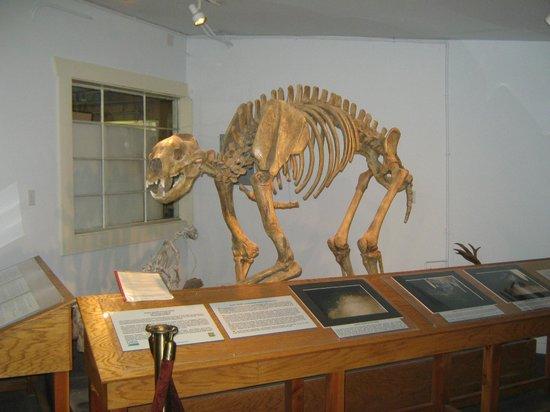 White Pine Public Museum