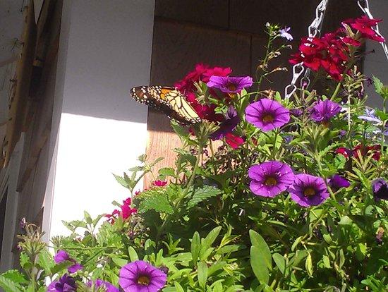 Kathleen's Kottage on Martha's Vineyard: Butterfly