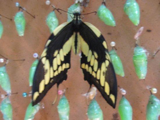 Butterfly Garden at Selvatura Park