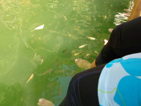Lake of the Pregnant Maiden: Fish Spa