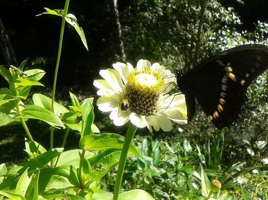 Tacuara Lodge: Habitan muchas mariposas