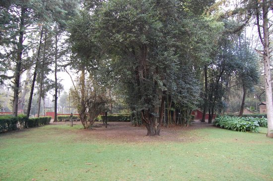 El Marques Hacienda Hotel: Vista de habitacion