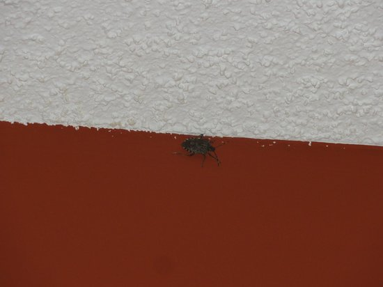 Comfort Suites Kingsport: Stinkbug at the ceiling
