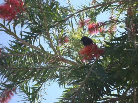 Tiger Den Resort: Humming bird in the trees in the resort