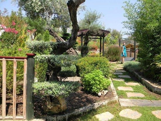 Molino del inca foto van jardin botanico molino de inca for Jardin botanico torremolinos