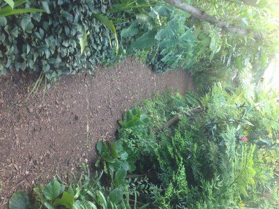 Dar Amane Guest Lodge: The garden path