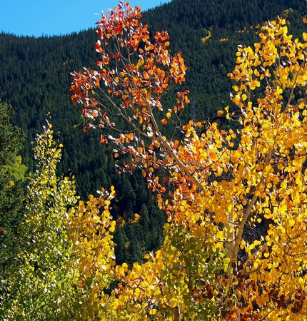 Guanella Pass during fall