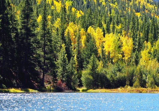 Guanella Pass : Fall colors above Georgetown