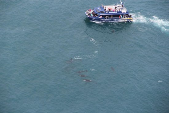 Kaikoura Helicopters Ltd.: Whales