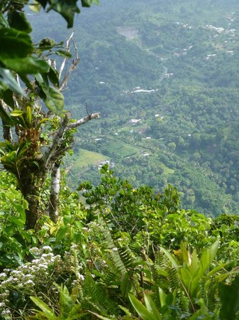 More Than A Cab Tours : View from the top of Gros Piton