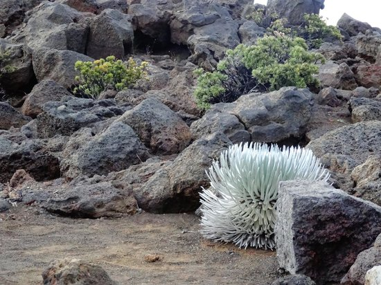 Haleakala National Park : Nature at its best - 2