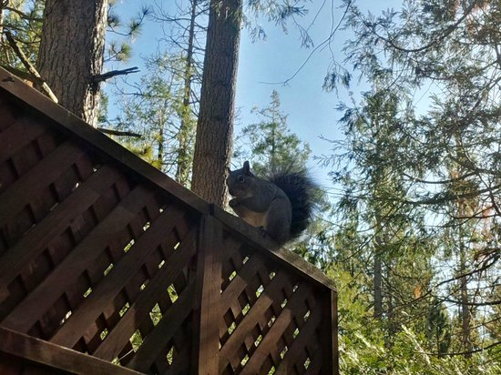Quiet Creek Inn: Squirrel!