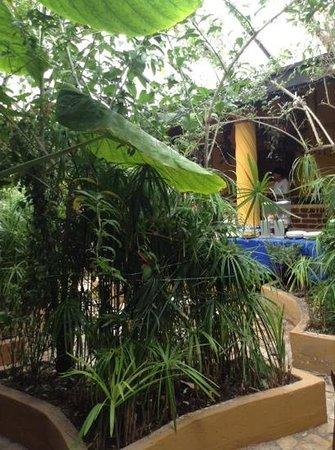 Hotel Hacienda Los Morales : el fabuloso buffette