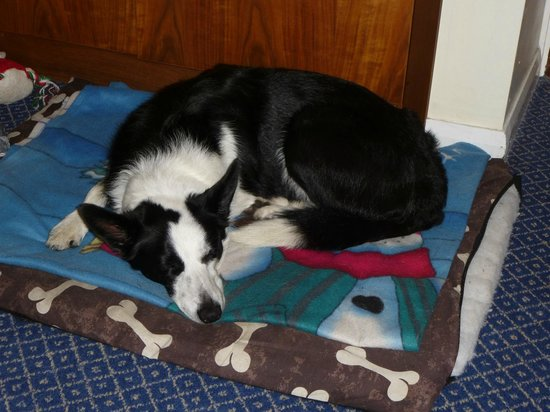 Damson Dene Hotel: Our tired Mollie resting in our lovely room along side us